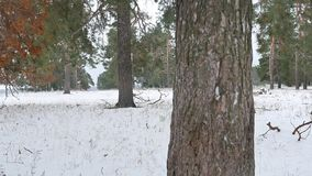 Trees forest nature christmas tree, snow frost cold landscape the winter Royalty Free Stock Photos