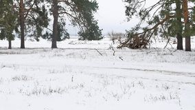 Trees forest nature christmas tree, snow frost cold the winter landscape. Trees forest nature christmas tree, snow frost cold winter landscape stock video footage
