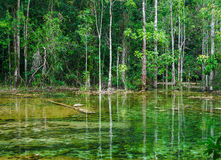 Trees and forest near Emerald  pond in Krabi, Thailand Royalty Free Stock Photos