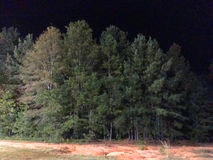 Trees in forest at night. Trees in forest on edge of field at night Stock Images