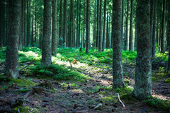 Trees in the forest. Stock Photo