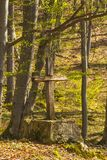 Trees in forest and old wooden cross Stock Photos