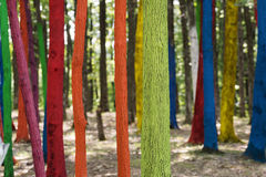 Trees in a forest painted with different colours as a protest of Stock Photo