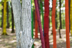 Trees in a forest painted with different colours as a protest of Royalty Free Stock Photography