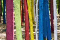 Trees in a forest painted with different colours as a protest of Stock Images
