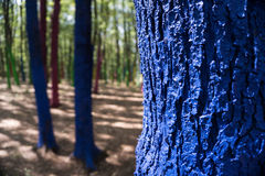 Trees in a forest painted with different colours as a protest of Royalty Free Stock Photo