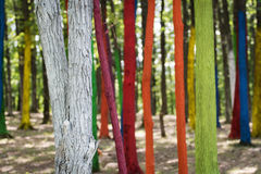 Trees in a forest painted with different colours as a protest of Stock Photos