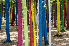 Trees in a forest painted with different colours as a protest of Stock Image