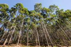 Trees Forest Plantation Farming Royalty Free Stock Photos