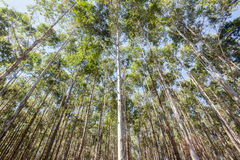 Trees Forest Plantation Stock Images