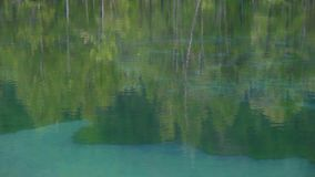 Trees and forest reflected in water. Trees and forest reflected in calm water stock footage