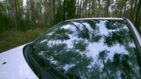 Trees, forest Reflection in Windscreen. Car drives through forest. On-board-camera. stock video