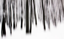 Trees in forest shaking camera Stock Images
