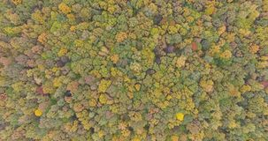 Trees In A Forest Shifting Colors During Autumn. Aerial shot of the trees in a forest shifting colors during autumn stock footage