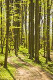 Trees in forest in the spring Royalty Free Stock Photos