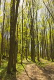 Trees in forest in the spring Stock Photos