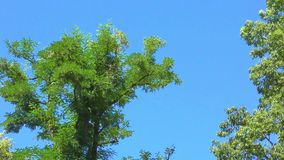 Trees in forest on summer day. Trees landscape UHD 2160 4k stock video