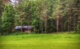 Trees forest summer finland grasses barn Stock Photo