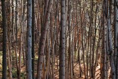 Trees in forest. texture. background. Trees in the forest. texture. background stock images