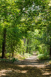 Trees in the forest. Trunks of trees in the forest with green leaves Stock Image