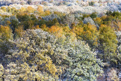 Trees in forest under first snow in autum Royalty Free Stock Image