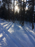 Trees in the forest under the snow winter. Natural beautiful background with frosted trees in winter Stock Photo