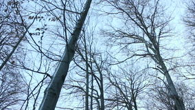 Trees in forest at winter stock video footage