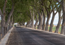 Trees form a canopy over a road Stock Image
