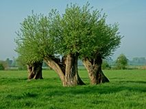 Trees forming intersting abstract shape(s). Stock Images