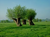 Trees forming intersting abstract shape(s). Stock Photography