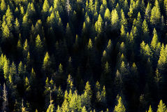 Trees in a Forrest Stock Photography