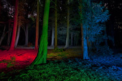 Trees in a forrest - light painted Stock Images
