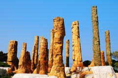 Trees fossil. Ancient times the trees formed fossil in park Royalty Free Stock Images