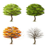Trees in four seasons Stock Photography