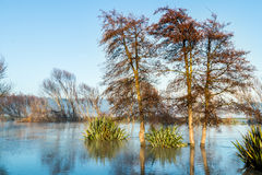 Trees of Foxton River. Foxton River loop over fill in winter Royalty Free Stock Photo