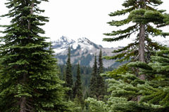 Trees Framing Cascade Mountain Range in Washington Royalty Free Stock Photography