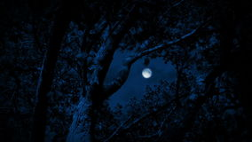 Trees Framing Full Moon Sky At Night. Trees framing sky in the moonlight late at night stock footage
