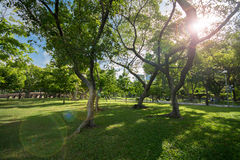 Trees with fresh green leaves in park Stock Photo