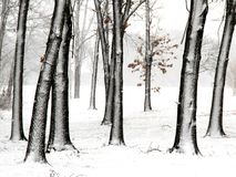 Trees in fresh snow royalty free stock photos