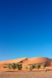 Trees in front of dune of Erg Chigaga. Trees in front of dunes of Erg Chigaga desert Royalty Free Stock Images