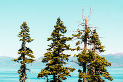 Trees in front of Emerald Bay and Lake Tahoe Stock Photography