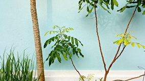 Trees in Front of a Light Blue Wall With White Moulding Stock Photos