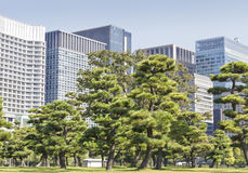 Trees in front of modern city offices Royalty Free Stock Images