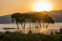 Trees in front of sinking sun. Lined trees on Biwa lake shallow in front of sinking sun Stock Photos