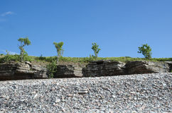 Trees at the frontline of cliffs by a coast with pebbles Stock Image