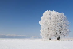 Trees in frost Royalty Free Stock Photography