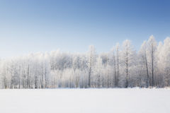 Trees in frost Stock Images