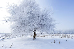 Trees in frost and landscape in snow against blue sky Royalty Free Stock Photos