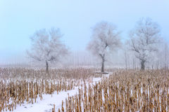 Trees in frost and landscape in snow against blue sky Stock Images