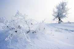 Trees in frost and landscape Stock Photography